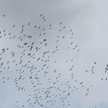 Calligraphy of birds